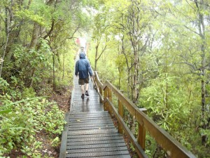 TRIP TO RANGITOTO ISLAND IN AUCKLAND NEW ZEALAND