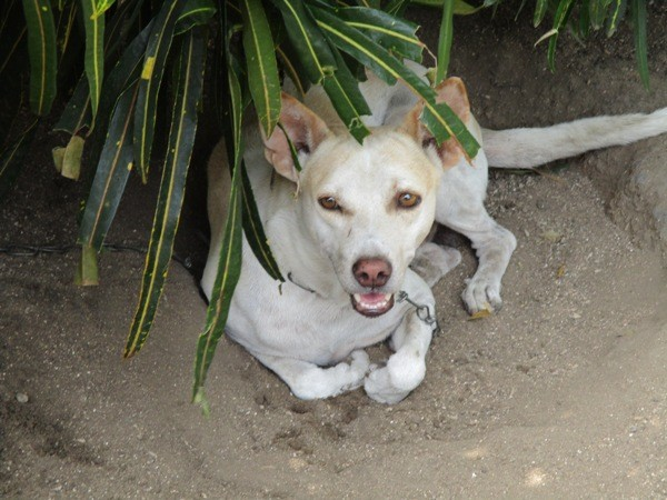 Jimmy, Vidhya's beloved dog who led her family to her body