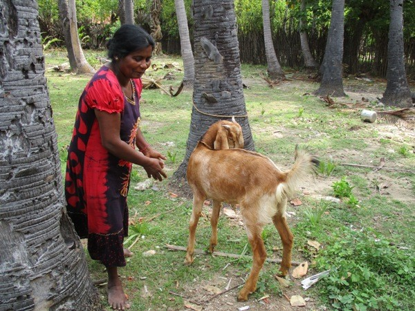 "Vidhya's mother and the Goat ""Kutty"""
