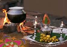 Thai Pongal – The Thanksgiving 'Thamilar Thirunaal'